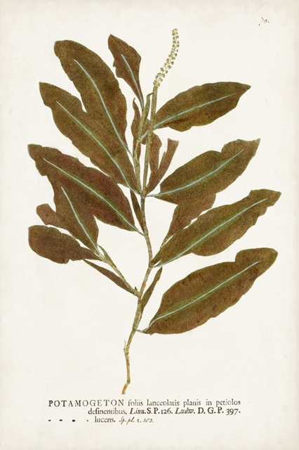 Nature Printed Ferns IV