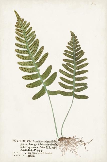 Nature Printed Ferns IX