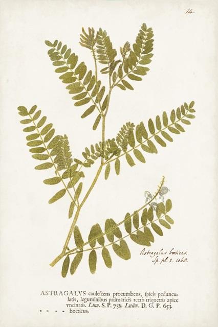 Nature Printed Ferns V