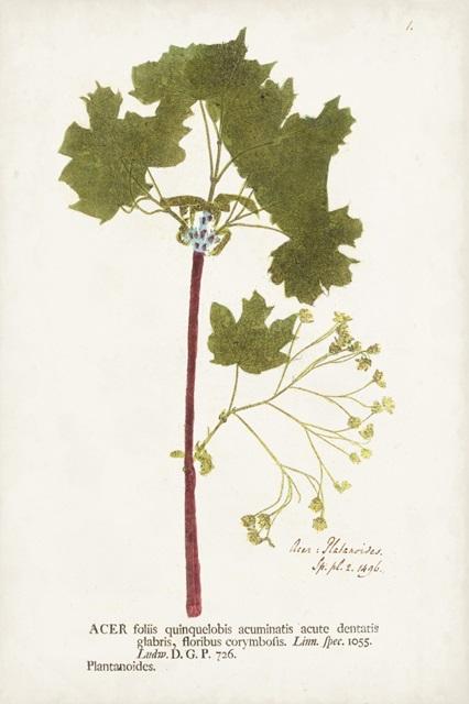 Nature Printed Ferns VI