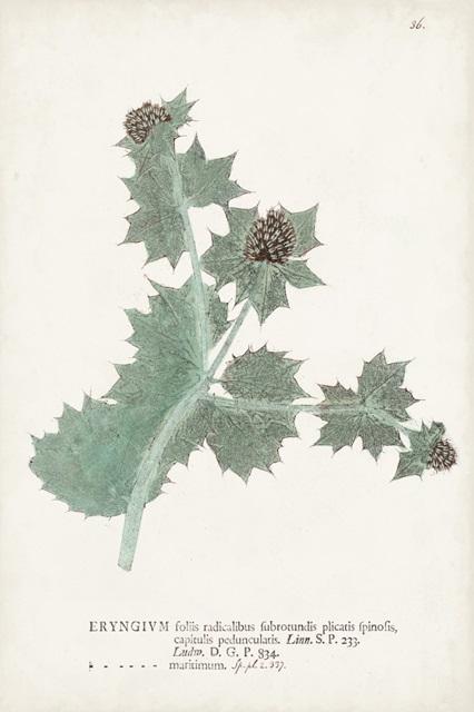 Nature Printed Ferns VII