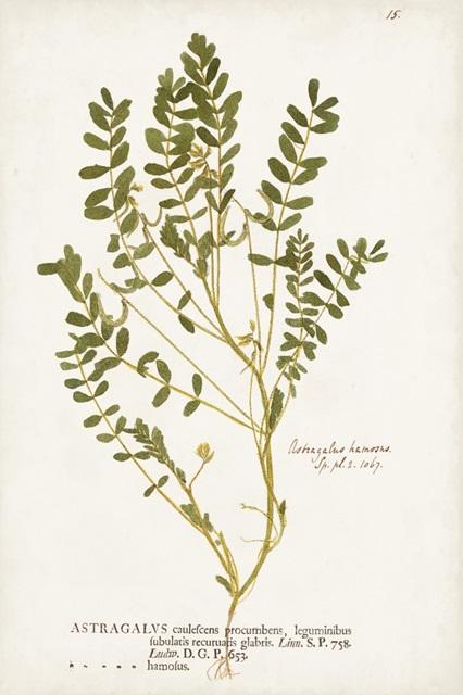 Nature Printed Ferns X