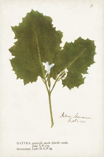 Nature Printed Ferns XI