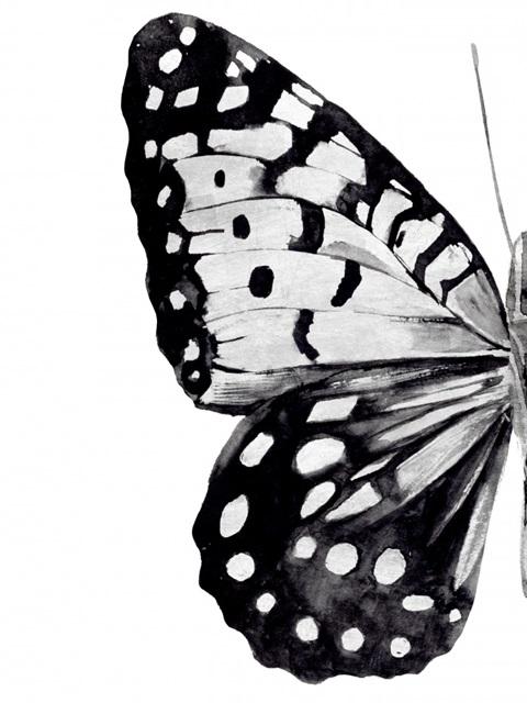 Monochrome Wings I