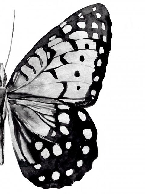 Monochrome Wings II