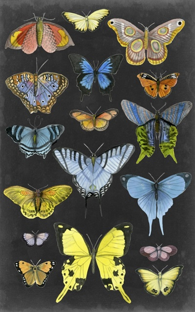 Graphic Butterfly Taxonomy II