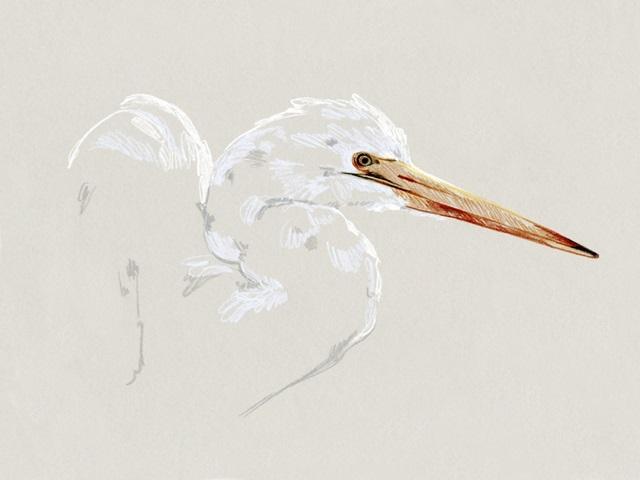 Bright Egret Sketch I