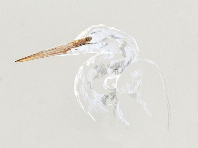 Bright Egret Sketch II