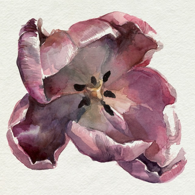 Susie's Tulips I