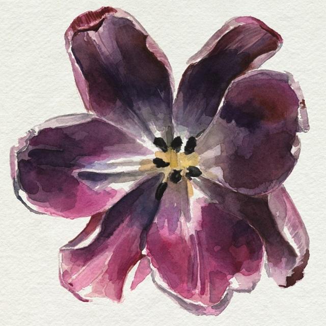 Susie's Tulips II